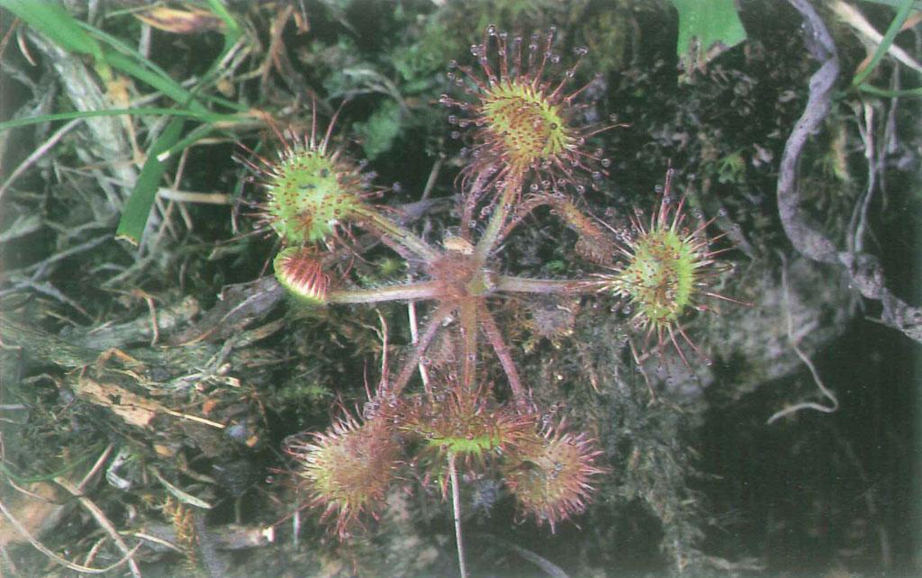 Cartolina pianta carrnivora